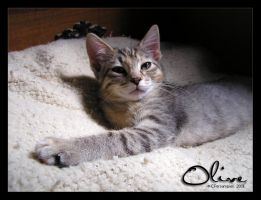 Olive - 07262009-2 by ConnieFaye