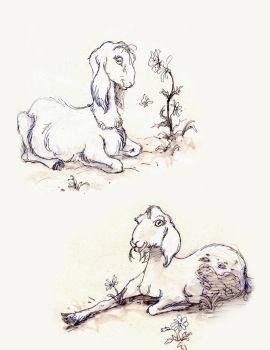 Goats by Warly