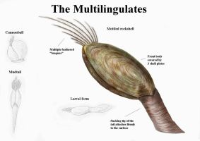 REP: The Multilingulates by Ramul