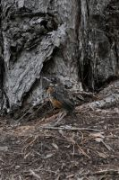 Baby Bird in Hiding by the-shmegster