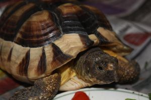 The tortoise who loves to pose by julie29