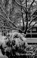 A tree in the snow. by ASFmaggot