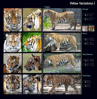 Feline Variations I: Tiger by sindos