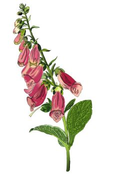 Fox Gloves - First Attempt by SweetToothCyanide95