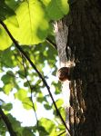 Snail On Tree by Caillean-Photography