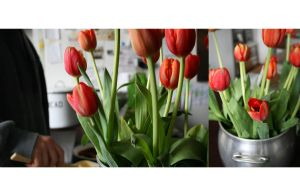 Is your tulip buttered? by AgnesVita
