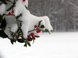 Holly bough and snow by oldsoulmasquer