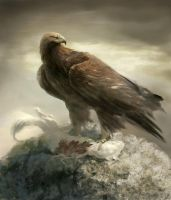 Golden eagle by Manzanedo