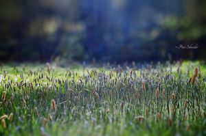 Meadow 3. by Phototubby