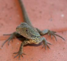 VERY CUTE YOUNG WATERDRAGON by LESHA
