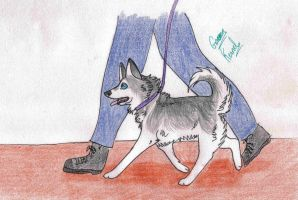 GK - Marina Exposition Training by Green-Kennel