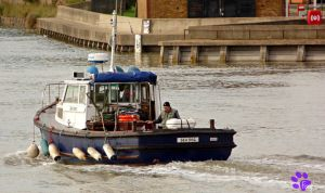 Sea Dog On The Medway (20.09.13) by LacedShadowDiamond