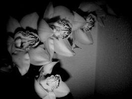 Orchids. by Lanixitah