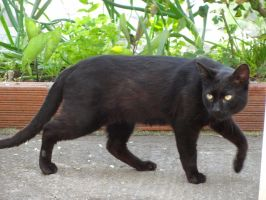 black panter by BL00DYSunflowers