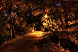 Park path HDR by damn91