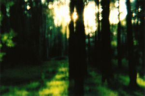 diana f+..dreamy forest by AnalogPhotographers