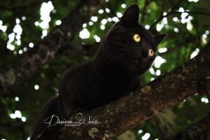 Yellow Eyes by DYWPhotography