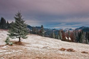 Early winter by lica20