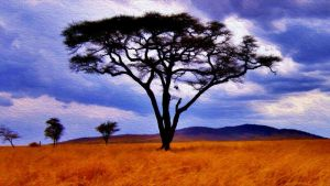 Acacia-tree by DPCloud01
