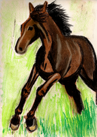 Horsie by MWaters