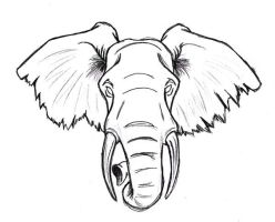 Elephant by Navina