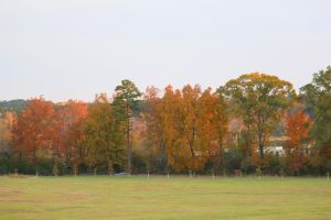 Autumn On Andrews by Rjet33