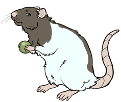 Rat Pea by Kiboku