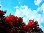 Autumn Flame by Invader-Roxas