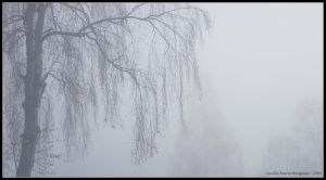mist by cilie