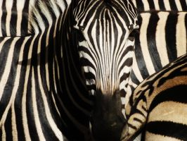 A vision in stripes by woodnutmegg
