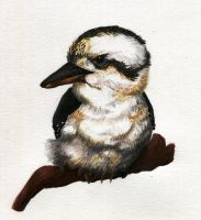 Kookaburra Bird by Kopale