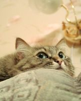Observer_cat_1 by gray-cat-54
