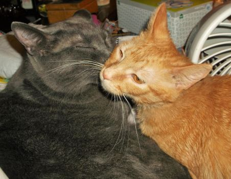 Bathtime for Pookie and Pumpkin! (6) by MystMoonstruck