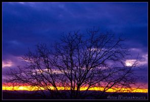 Purple Sunrise by allym007