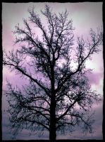 Filtered Tree by AhoyFaytho