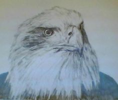 Eagle. by Katie6sh