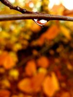 Tree, leafs and drop by bellatrix18