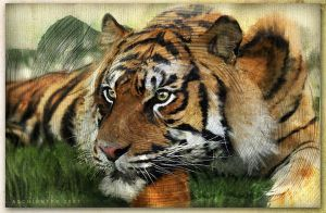 Tiger_Cvns by Aschiontry