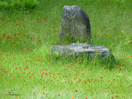 North and Altar Stones Midsummer by Mogrianne