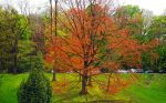 Fire tree by laventa