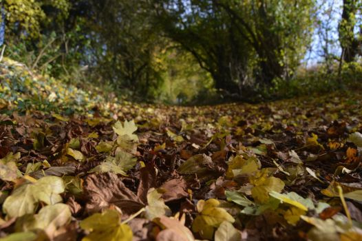 Fallen Leaves by Just--Saying