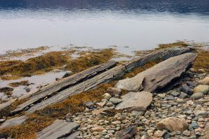 rocks and kelp by LucieG-Stock