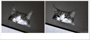 Black and white kitty. by IdGiveMyHeart