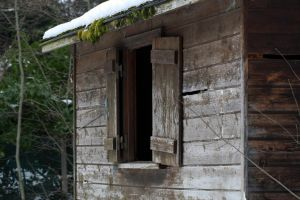 In the Woodshed? by organicvision
