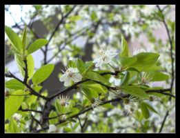 Spring in the city no.2 by 99-in-the-shade