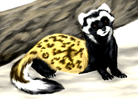 Marbled Polecat by Forbidding