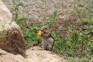 Brazen Chipmunk by olearysfunphotos