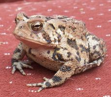 Toad 5 by Penny-Stock