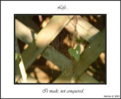 Life Web by kome