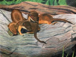 Three Weasels by bustercharlie